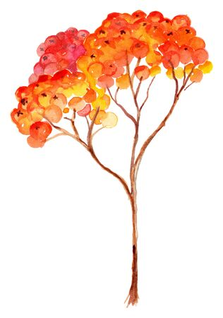 ashberry: Watercolor rowan ashberry branch botanical illustration isolated.
