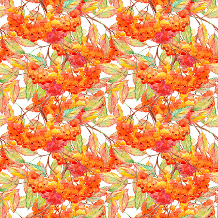 ashberry: Watercolor rowan ashberry leaf branch seamless pattern. Stock Photo