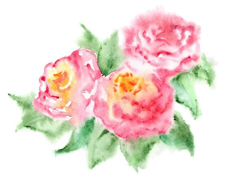 tea rose: Watercolor pink tea rose flower floral composition isolated.