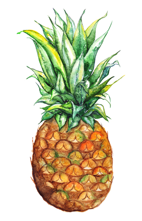 Watercolor hand drawn pineapple exotic tropical fruit isolated.