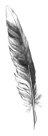 black feather: Watercolor black and white monochrome single feather isolated.