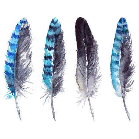 Watercolor black and blue jay feather set isolated.