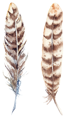 brown stripe: Watercolor brown beige stripe feather set isolated.