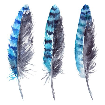 jay: Watercolor black and blue jay feather set isolated.