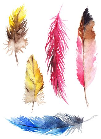 jay: Watercolor colorful jay parrot feather isolated set. Stock Photo
