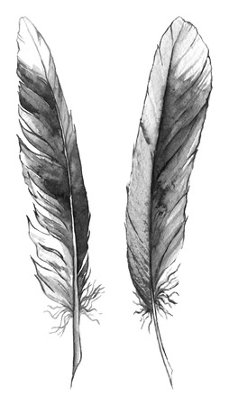 black feather: Watercolor black and white monochrome feather set isolated.