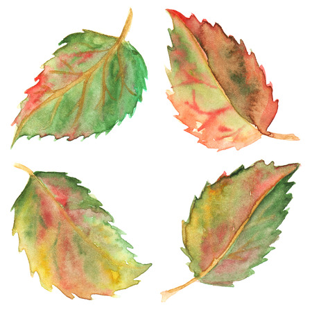 elements of nature: Autumn green yellow red leaves set isolated.
