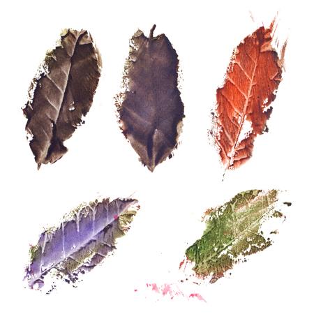 dried: Autumn fall dried tree leaf set isolated.