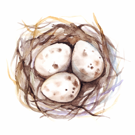 nestling birds: Watercolor vector nest with quail eggs isolated.