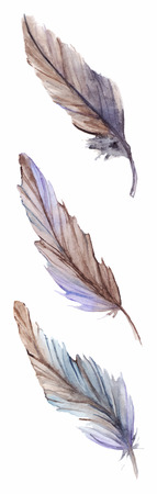 blue violet: Watercolor gray grey blue violet brown feather set isolated.