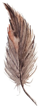 feather vector: Watercolor brown gray grey single feather vector isolated.