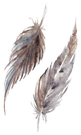 Watercolor brown gray grey feather pair vector set isolated. Çizim