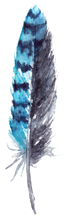 jay: Watercolor black and blue jay feather vector isolated.