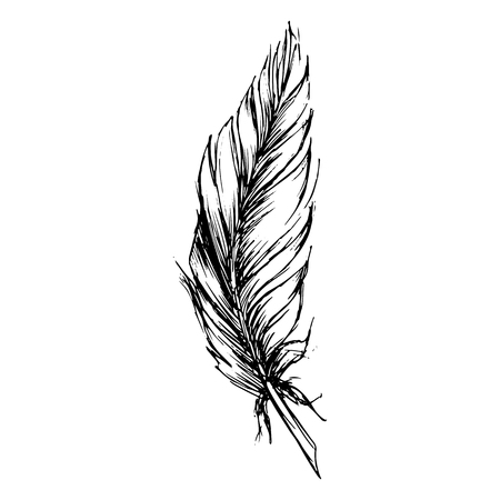 Monochrome black and white bird feather sketched art.