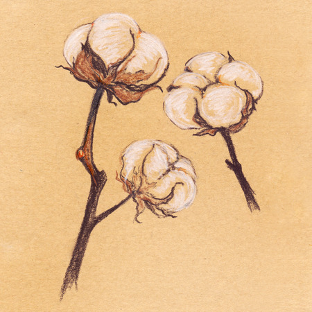 Vintage cotton sepia plant sketch craft paper isolated.