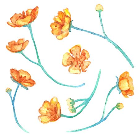 blue petals: Watercolor yellow buttercup flowers isolated vector set.
