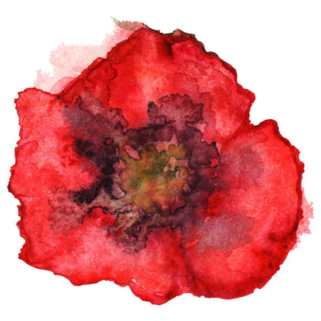 red poppy: Watercolor red poppy flower sketch isolated vector.