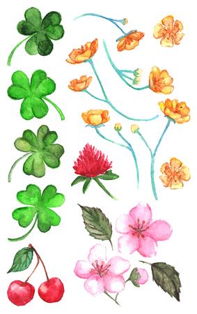 Flower clover cherry berry buttercup set clip art isolated vector.