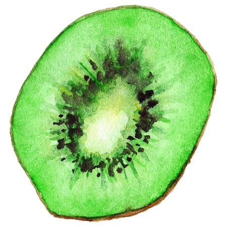 kiwi fruta: Acuarela mitad del vector exótico kiwi aislado.