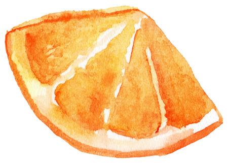 Watercolor slice of orange fruit isolated vector.