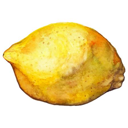 exotic fruit: Watercolor lemon citrus yellow exotic fruit vector isolated.