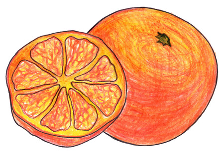 exotic fruit: Sketch orange exotic fruit and slice hand drawn isolated vector.