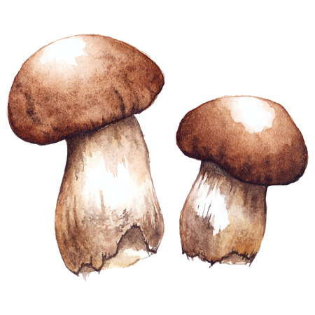 pairs: Watercolor two pair white porcini mushrooms isolated vector.
