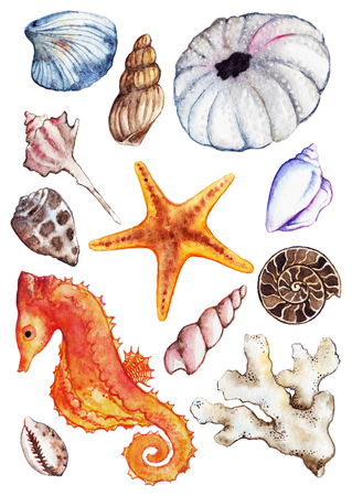 Watercolor sea ocean seahorse seashell coral ammonit urchin set.
