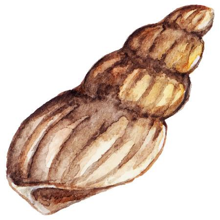 Watercolor sea shell isolated clip art vector.