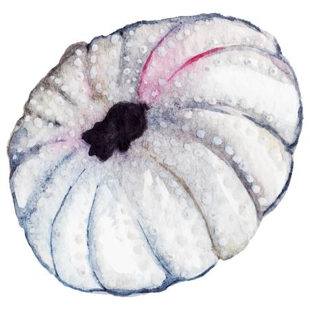 Watercolor sea shell urchin isolated clip art vector. Illustration