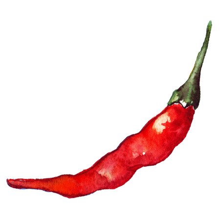spicy chilli: Watercolor red hot chili chilli spicy pepper isolated. Stock Photo