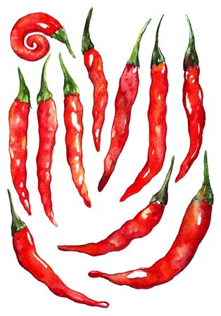 spicy chilli: Watercolor red hot chili chilli spicy pepper set isolated.