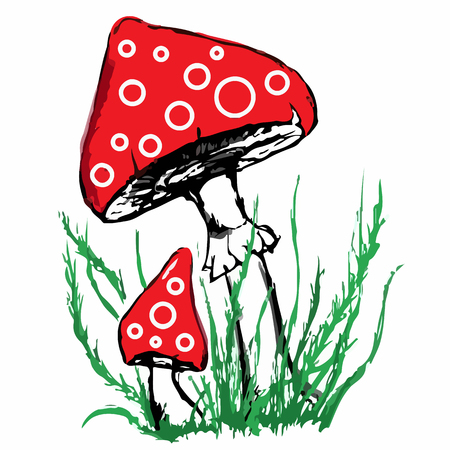 a toadstool: Mushrooms amanita toadstool pair couple sketch isolated vector.