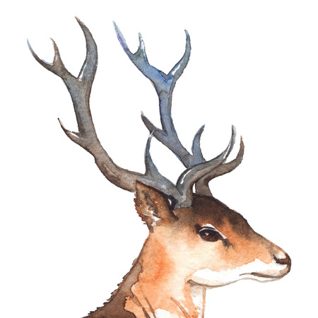 Watercolor deers head with horns wood animal isolated.