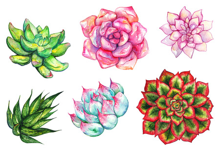 Watercolor succulent cactus flower plant hand drawn set isolated.