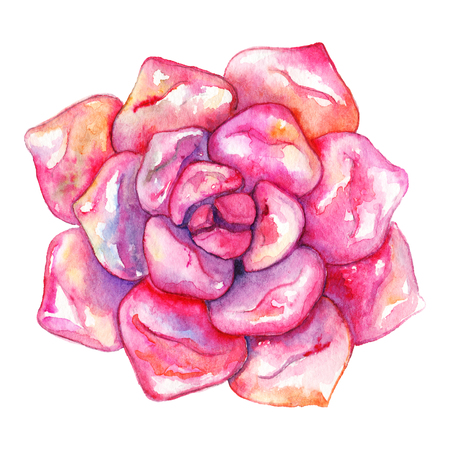Watercolor succulent cactus flower plant hand drawn isolated.