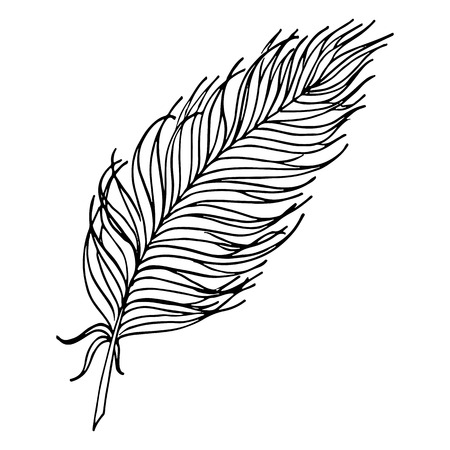 Monochrome black and white bird feather vector sketched art.