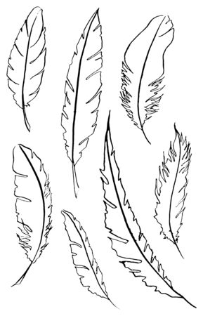 feather vector: Monochrome black and white bird feather vector set.