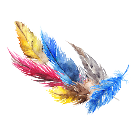 jay: Watercolor colorful bird feather abstract composition isolated. Stock Photo