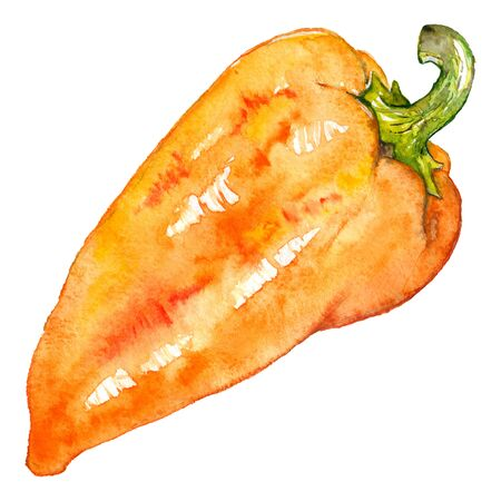 hand bell: Watercolor orange yellow sweet bell Bulgarian pepper vegetable isolated.
