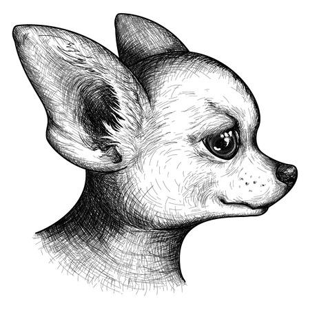 白黒肖像画頭のチワワ犬子犬ペット動物スケッチ ベクトル。  イラスト・ベクター素材