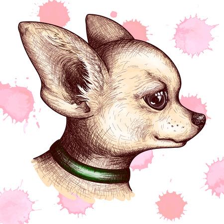 수채화 초상화 머리 치와와 강아지 강아지 애완 동물 동물 스케치 벡터.