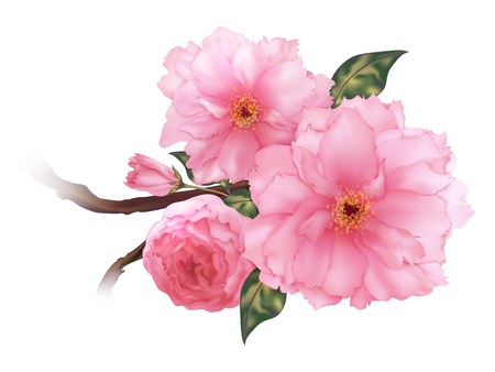 3D 현실적인 핑크 체리 사쿠라 꽃 b 일러스트