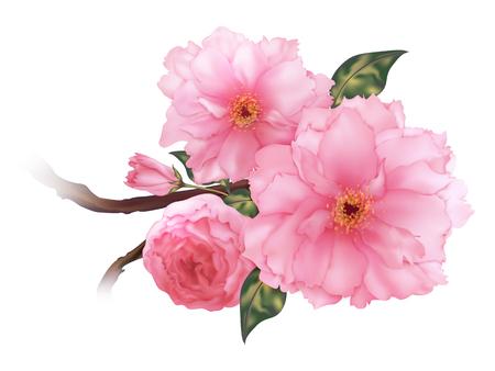 3D realistische roze kersen Sakura bloem b