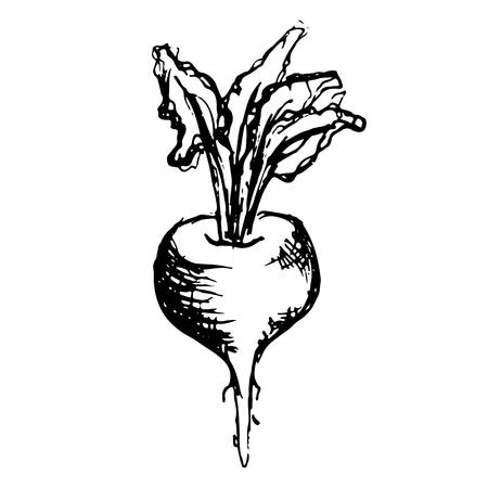 Einfarbiges Schwarzweiss-Zuckerrübengemüse skizzierte Linie Kunstvektor. Vektorgrafik