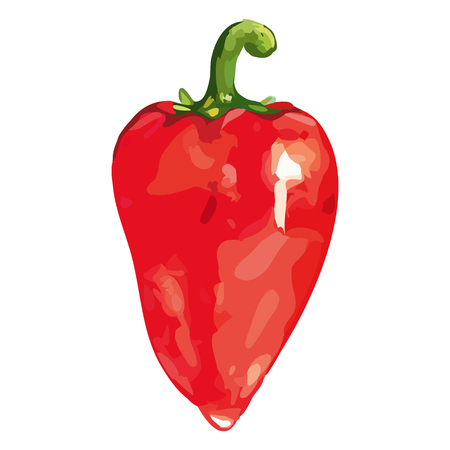 Watercolor red sweet bell Bulgarian pepper vegetable isolated vector. Illustration
