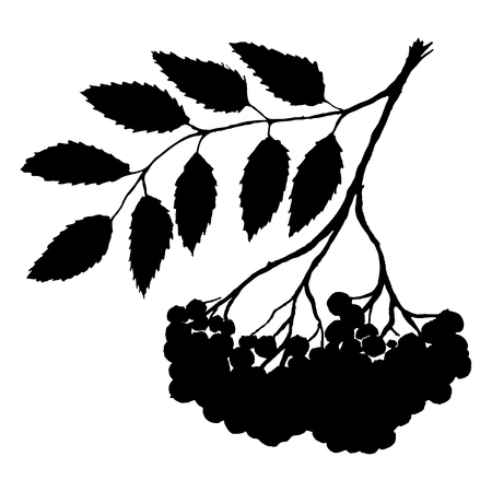 Monochrome black rowan rowanberry ashberry berry leaf branch bunch silhouette botanical illustration isolated vector.