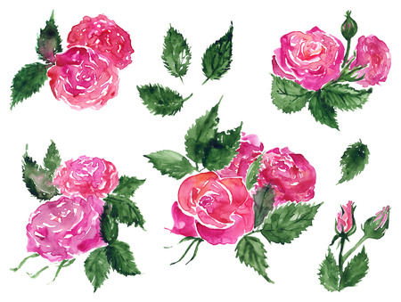 Watercolor pink red rose flower green leaf plant hand drawn clip art set isolated. Stok Fotoğraf - 123663177