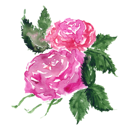 Watercolor pink red rose flower green leaf plant hand drawn clip art isolated.