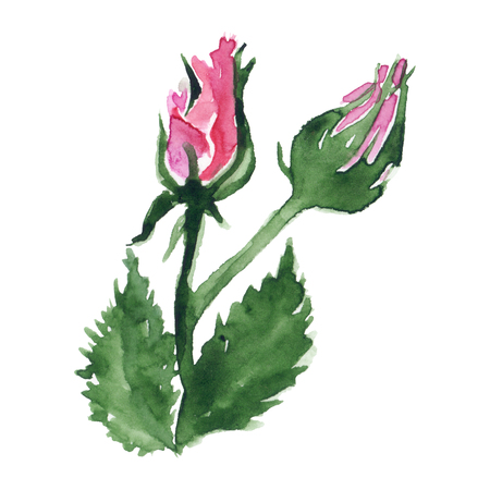 Watercolor pink red rose flower bud green leaf plant hand drawn clip art isolated. Stok Fotoğraf